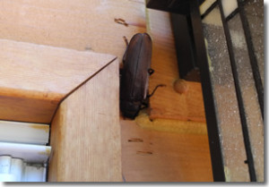 Insects In Your Home Are No Good Tips To Prevent Home
