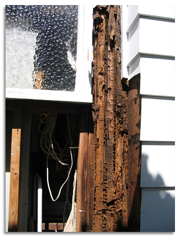 Dry Rot Wood Repair What Causes Dry Rot In Wood