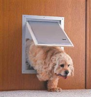 dog using a pet door