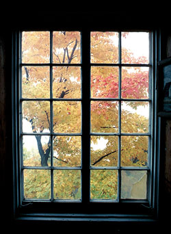 Window looking at fall leaves