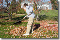 Boy helping with household chores, raking leaves.