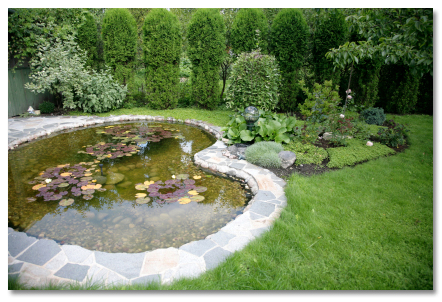 yard with pond