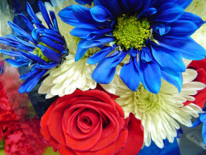 Red-White-Blue-Flowers-4th-July