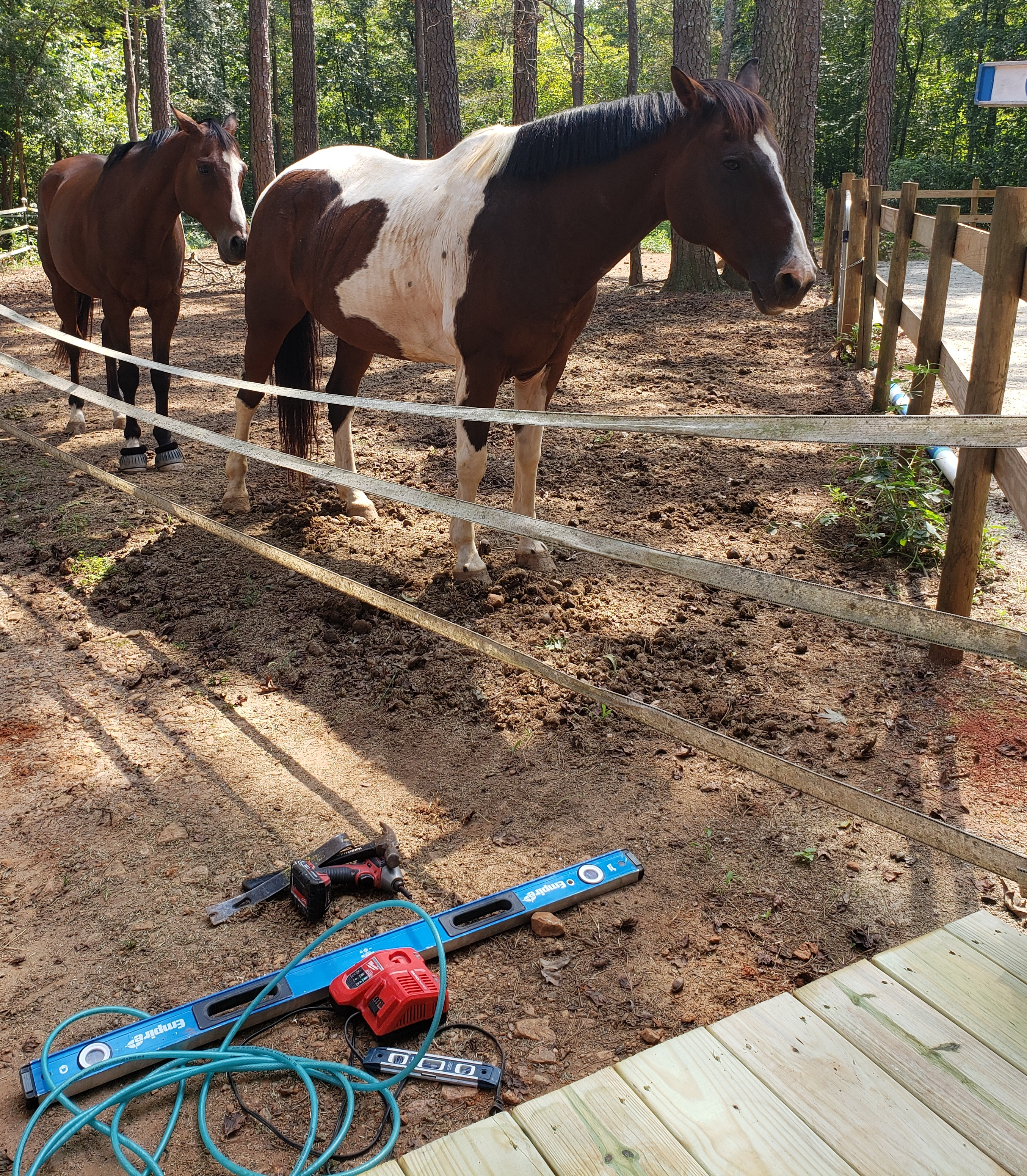 horse standing behind gate